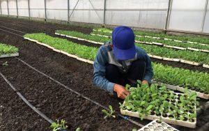 Nông sản được trồng trên đất sạch